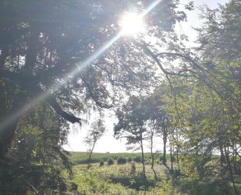 Solen gennem træerne